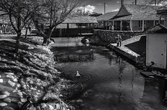 A Duck, Two Kids, and a Creek (keycmndr) Tags: blackandwhite bridges cybershutterbug hdr people photographersontumblr saltlakecity streetphotography utah