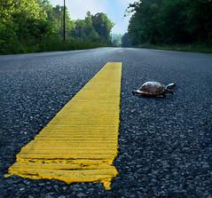 Point Of No Return (nailbender) Tags: yellow topf50 topv555 highway bravo 500v20f turtle blountcountyalabama nailbender topvaa flickrplatinum jdmckinnon