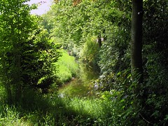 Green is beautiful! (Coanri/Rita) Tags: trees holland green nature creek ilovenature bomen groen thenetherlands veluwe sloot naturescape 1on1nature