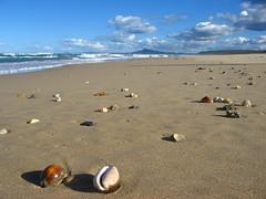 shoreline (*omnia*) Tags: ocean sea shells beach topf25 topv111 coast seaside sand topv333 australia cowrie bongil cowries