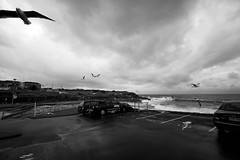 Flee! (ShutterbugL) Tags: clovelly seagulls flight storm dark clouds sea waves foam nsw sydney australia