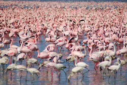 Flamingo Convention