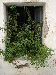 old window in the old city I (_tonidelong) Tags: old city abandoned window lafotodelasemana ventana casa decay 2006 ruinas lfs abandonado caceres analiza7 ph225 lfs062006