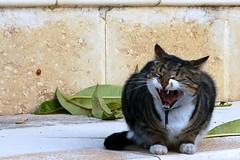 Angry kitty