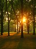 High Park at sunset (Christo_Mck) Tags: trees sunset toronto highpark