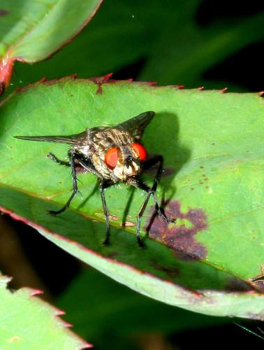 flycropped