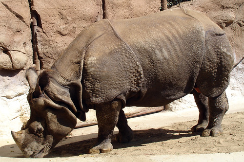 Rhino 1 by daryl_mitchell, on Flickr