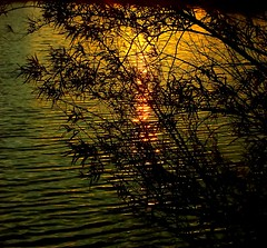 Rippled Watery Willow sunset (algo) Tags: light sunset water photography topf50 topv555 quality topv1111 topv999 willow topv50 60622 50v 50f gtaggroup westonturvillereservoir