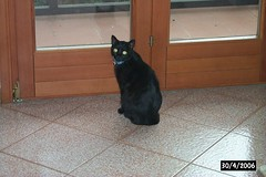 Muffin ('Brizio) Tags: italy cat blackcat italia lucca muffin gatto gattonero