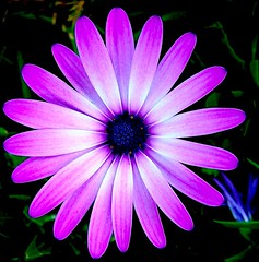 purple flower - (Earlette) Tags: flower colour ilovenature close purple