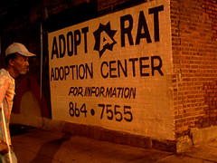 NYC #50 (digital_freak) Tags: nyc newyork rodent rat harlem manhattan adopt adoption phonenumber digitalfreak adoptioncenter adoptarat