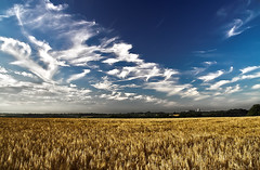 This morning (Andreas Reinhold) Tags: morning blue summer sky field clouds geotagged corn farm gradient fields farmer bergischesland mettmann polarize geolat51231666 geolon6956577