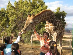 Giraffe and Azi and Other People (jsgiuseppe) Tags: giraffe lionpark