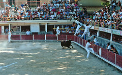 course camarguaise (bullfighting) (elfis gallery) Tags: street people france sports public sport festival publicspace french folklore bull bulls provence tradition bullfighting todolist southfrance bilderfantasien coursecamarguaise