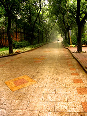 Towards the Light II (Life in AsiaNZ) Tags: china city trees light rain tag3 taggedout canon landscape person asia tag2 tag1 pavement path south chinese powershot southern  peoplespark  nanning  guangxi          towardsthelight  lovephotography  lifeinnanning  flickrgiants