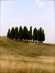 still in existence (sweetnseattle) Tags: family trees italy countryside tuscany cypress toscana anotherworld crushes togetheralone cypressi