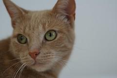 Buranshe (kurafire) Tags: cats holland cat geotagged kitten map thenetherlands kitty kittens zoeterwoude buranshe onthemap