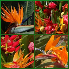 Tropical Explosion (Pink Hibiscus) Tags: flowers flower d50 hawaii ginger fdsflickrtoys nikon oahu mosaic nikond50 birdofparadise tropical honolulu heliconia allrightsreserved copyrighted tropicalflowers torchginger pinkhibiscus