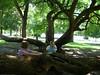 The tree in Trevett-Finch Park (Crystl) Tags: thursday champaignillinois ilovethistree utatathursdaywalk15 trevettfinchpark