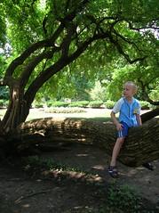 The tree in Trevett-Finch Park (Crystl) Tags: thursday champaignillinois ilovethistree trevettfinchpark cantexplaintheexpressiononhisface