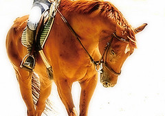 Golden Red Hunter-Jumper (Isabelle Ann) Tags: horse art nature digital photoshop wow caballo cheval jumping bravo photographer searchthebest digitalart dorset isabelle jumper hunter cavallo cavalo pferd equine equus paard horseshows hunterjumper mostbeautiful magicdonkey manchestervt dorsetvt equineart vermontsummerfestival abigfave kkfav isabelleann 1000viewclub isabelleanngreen supremeanimalphoto equestrianart hunterjumpers dorsetsummerfestival equinephotographer hunterjumpershows artistichorse isabellegreen equitationart hunterjumperart dorsethorseshow hunterjumperphotography hunterjumprphotographer isabellegreenphotography isabelleannphotography isabelleannhorses mostbeautifulhorses equineartist hunterjumperphotographer hunterjumperphotograhy