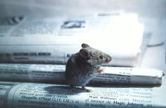 Raton de biblioteca - by trebol-a