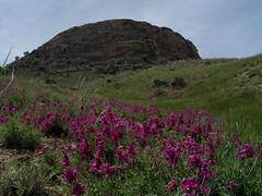 Urmia, West Azerbaijan Province, Iran