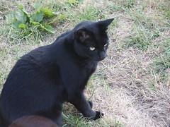 PICT0184 (wickenpedia) Tags: archaeology cat mog timeteam wicken wwwwickenarchaeologyorguk leocassandramcneir