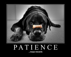 Patience (RottieLover) Tags: bw dog pet pets color dogs animal animals puppy fdsflickrtoys puppies canine rottweiler vesuvio mrsu rottweillers obsessiveflickrites abigfave