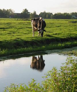 polder in avondlicht