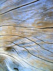 Silky Skin (MaureenShaughnessy) Tags: ocean wood trees sea 15fav tree beach lines island skin patterns smooth surface sensual textures driftwood utata wrinkles silky quadra anthropomorphic touchthis likeskin skinofatree seasonalrhythmslight