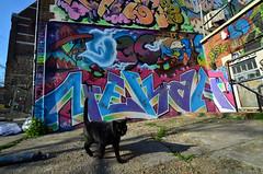 DSC_0252KKA (Di's Free Range Fotos) Tags: nekah aktone lostboysgraffitiblack cat street brighton uk blackcat