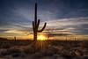 Saguaro National Park (Eric Zumstein) Tags: saguaronationalpark saguaro cactus desert sunset clouds sunburst nature