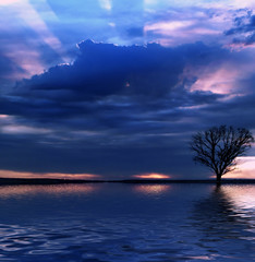 Teardrop (Craig Shillington) Tags: sunset sun tree love water set clouds ilovenature interestingness interesting mod bravo quality australia explore massiveattack lonely ripples teardrop lonelytree topten helluva 10000v supershot 175f craigshillington abigfave superbmasterpiece beyondexcellence diamondclassphotographer flickrdiamond bestsun eastwest2008