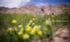 Chemrey Gompa, Ladakh, India (monsieur I) Tags: world travel india mountain canon landscape monastery canonef2470mmf28lusm ladakh chemreygompa canoneos5dmark3 monsieuri ivandupont