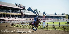 American Pharoah (EASY GOER) Tags: summer horses horse ny newyork sports beauty race canon athletics track saratoga competition upstate running racing 5d athletes races spa thoroughbred equine thoroughbreds markiii