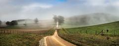 Rural Life (Mark McLeod 80) Tags: road fog rural landscape country dean australia victoria vic ballarat 2015 markmcleod sigma24105f4 markmcleodphotography