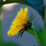 Yellow flower thumbnail