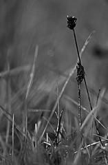 Wenn ich vllig erschpft rumliege sieht gegenseitiges Sttzen immer noch viel zu anstrengend aus. (Manuela Salzinger) Tags: wood morning autumn forest sunrise dawn herbst dmmerung wald sonnenaufgang morgen