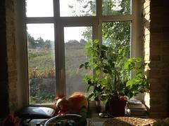 i (GrusiaKot) Tags: window ukraine finestra pace villaggio  ucraina     camapgna  hotiv
