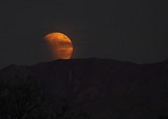 Moonrise 112 (Az Skies Photography) Tags: red arizona moon rio canon eos rebel eclipse blood az super september rico moonrise 27 lunar lunareclipse bloodmoon 2015 arizonasky riorico rioricoaz t2i 92715 arizonaskyline supermoon canoneosrebelt2i eosrebelt2i arizonaskyscape 9272015 superbloodmooneclipse superbloodmoon september272015