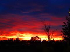 Blazing Edmonton sunset (peggyhr) Tags: blue trees sunset red urban orange canada black yellow edmonton silhouettes alberta thegalaxy peggyhr dsc01170a