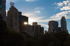 (ISpete) Tags: nyc newyorkcity newyork bird orlando centralpark timessquare nyu msg madisonsquaregarden bryantpark orlandofl newyorkuniversity essexhouse orlandoflorida littlebird nyuniversity nycphotographer unknownvision pbphotography nycprimeshot nycphotog