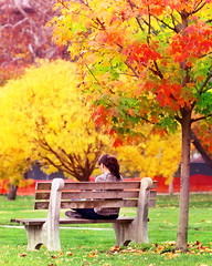 Autumn at Ohio State (Elliotphotos) Tags: autumn trees ohio people tree bench university state elliot benches ohiostate gilfix elliotphotos elliotgilfix