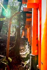 Thousands of Gates (-Astin-) Tags: trip travel vacation japan kyoto trips shrines fushimiinari toriigate canon7d tokina111628