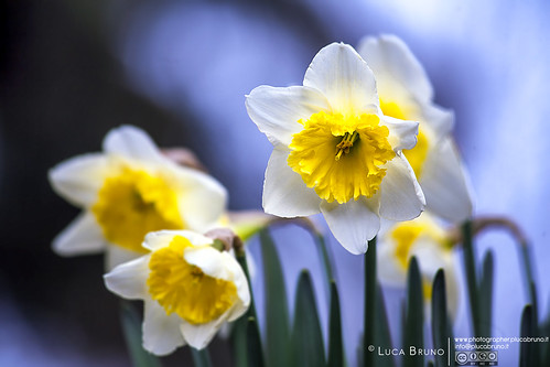 """Narciso • <a style=""""font-size:0.8em;"""" href=""""http://www.flickr.com/photos/49106436@N00/23050507004/"""" target=""""_blank"""">View on Flickr</a>"""