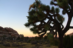 Sunset in the Hall of Horrors (Joshua Tree National Park) Tags: sunset nationalpark nps joshuatree joshuatreenationalpark joshuatreenp