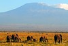 Mount Kilimanjaro. early morning. (welloutafocus) Tags: elephants amboseli kenya africa safari kilimanjaro mountain
