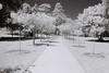 Path (goodfella2459) Tags: nikon f65 ilford sfx 200 35mm black white film hoya infrared r72 filter path trees bowral southern highlands new south wales bwfp milf