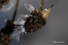 8342   Winter Ostalb (Canonklick) Tags: canon 6d macro 100mm winter eis ostalb eiskristall